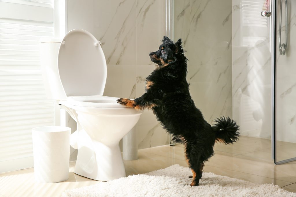 Potty training your pup with puppy and toilet