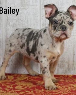 Bailey 01