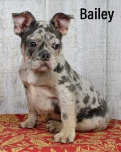 Bailey 03