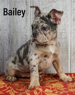 Bailey 04