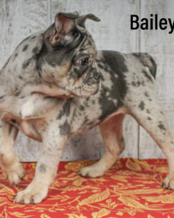 Bailey 05