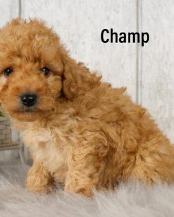 Champ 05