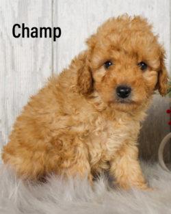 Champ 06