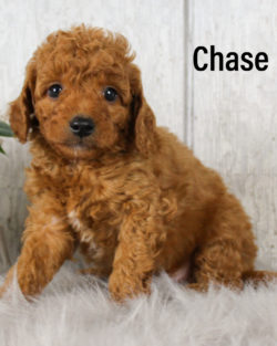Chase 03