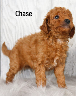 Chase 04