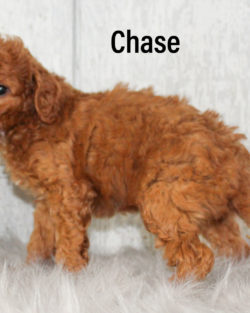 Chase 05