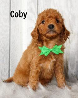 Coby 01