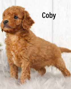 Coby 03