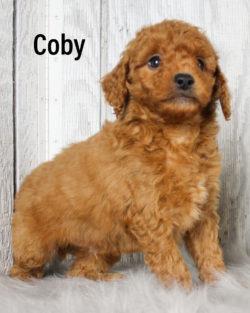 Coby 04