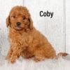 Coby 05