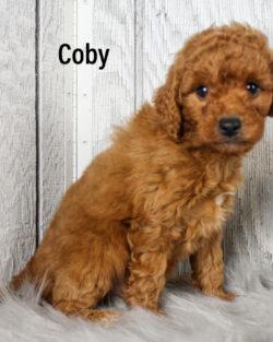 Coby 06