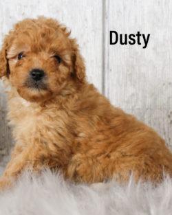 Dusty 03