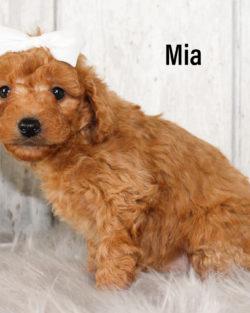 Mia 03