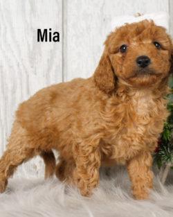Mia 04