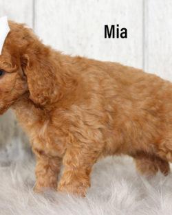 Mia 05