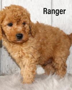 Ranger 02