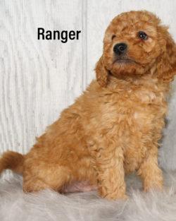 Ranger 05