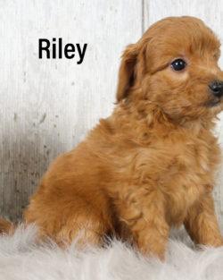 Riley 01