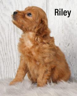 Riley 02