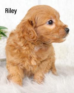 Riley 03