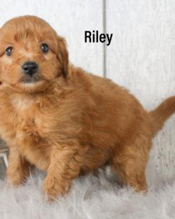 Riley 06