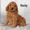 Rocky 02