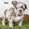 Roxy 06