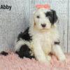 Abby 08