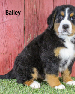 Bailey 01 1