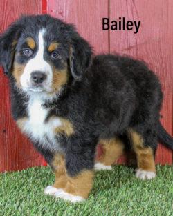 Bailey 03 1