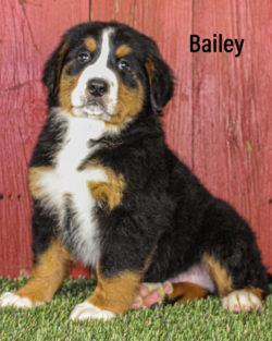 Bailey 05 1