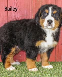 Bailey 06 1