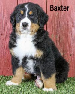 Baxter 01