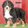 Baxter 02