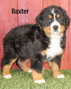 Baxter 03
