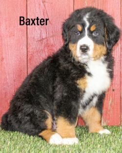 Baxter 04
