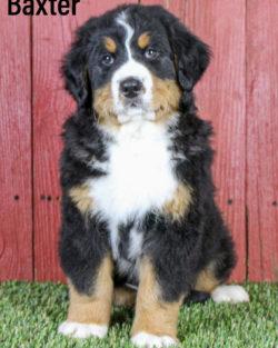 Baxter 05