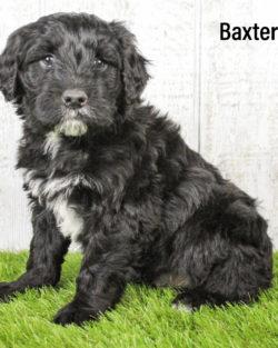 Baxter 06