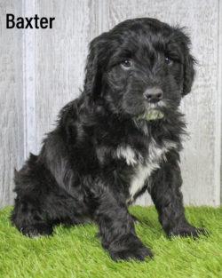 Baxter 08