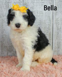 Bella 03