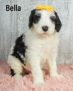 Bella 06
