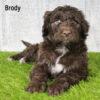 Brody 03