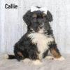 Callie 04