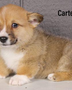 Carter 02