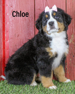 Chloe 01