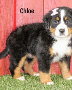 Chloe 02