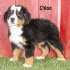 Chloe 04