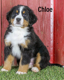 Chloe 05