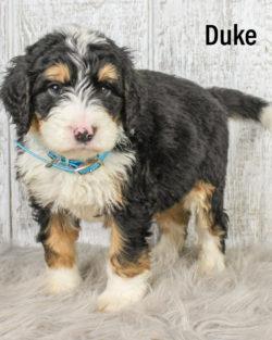 Duke 02
