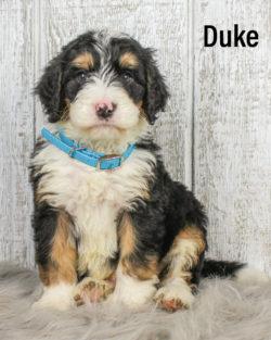 Duke 04
